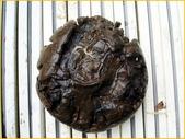 龜甲山林:龜甲石3.jpg