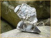 龜甲山林:龜甲石9.jpg