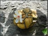 龜甲山林:油桐花季.jpg