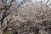 180402_高松-台北:2018-0402-074715.jpg
