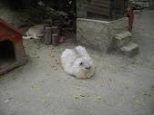 雙叟香草貓園:PICT0935.JPG