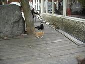 雙叟香草貓園:PICT0937.JPG