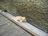 雙叟香草貓園:PICT0943.JPG