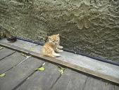 雙叟香草貓園:PICT0938.JPG