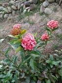 2020-01-05_鶯歌永吉公園:IMG_20200105_163601.jpg