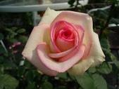 花:玫瑰.jpg