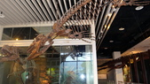 樹谷生活科學館園區:DSC07394台南科學園區~樹谷生活科學館~恐龍展館.JPG