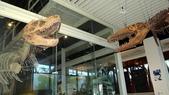 樹谷生活科學館園區:DSC07393台南科學園區~樹谷生活科學館~恐龍展館.JPG