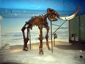 樹谷生活科學館園區:P1070095台南科學園區~樹谷生活科學館~恐龍展館.JPG