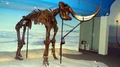 樹谷生活科學館園區:DSC07396台南科學園區~樹谷生活科學館~恐龍展館.JPG