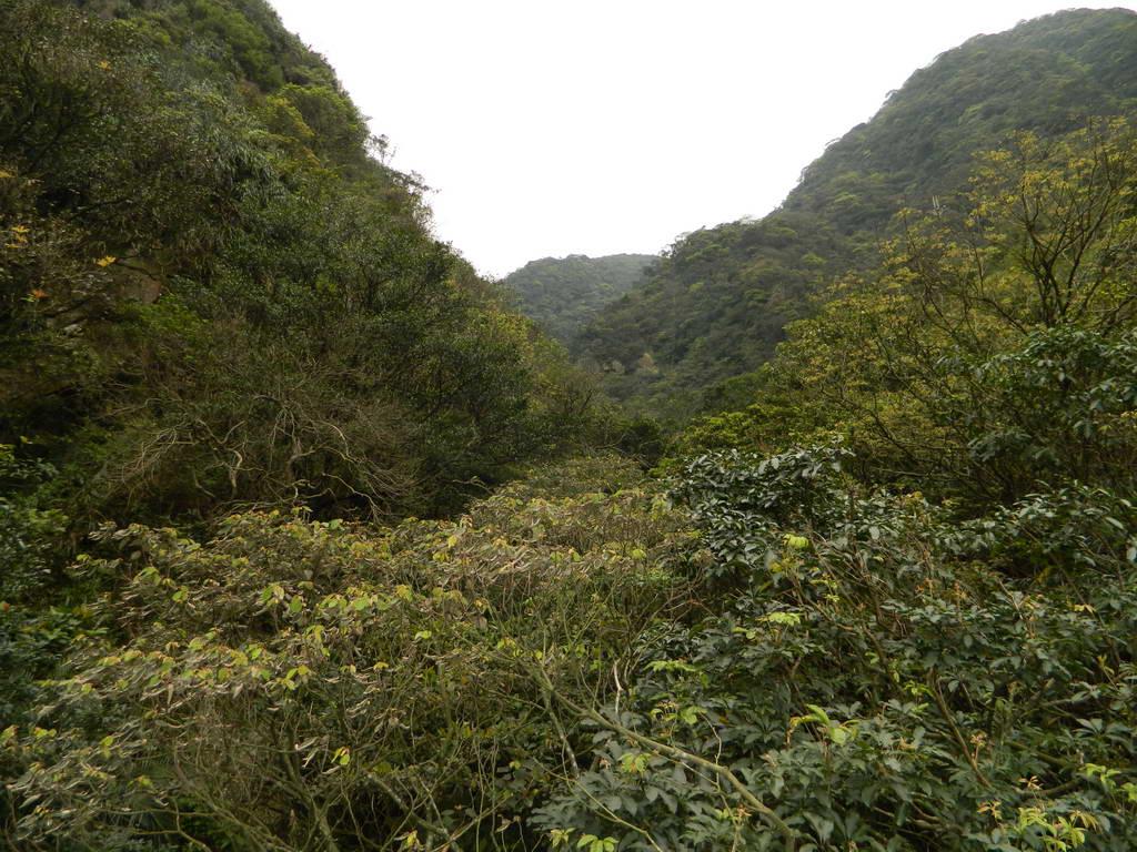 大小粗坑山腰路:大小粗坑山腰路39.JPG
