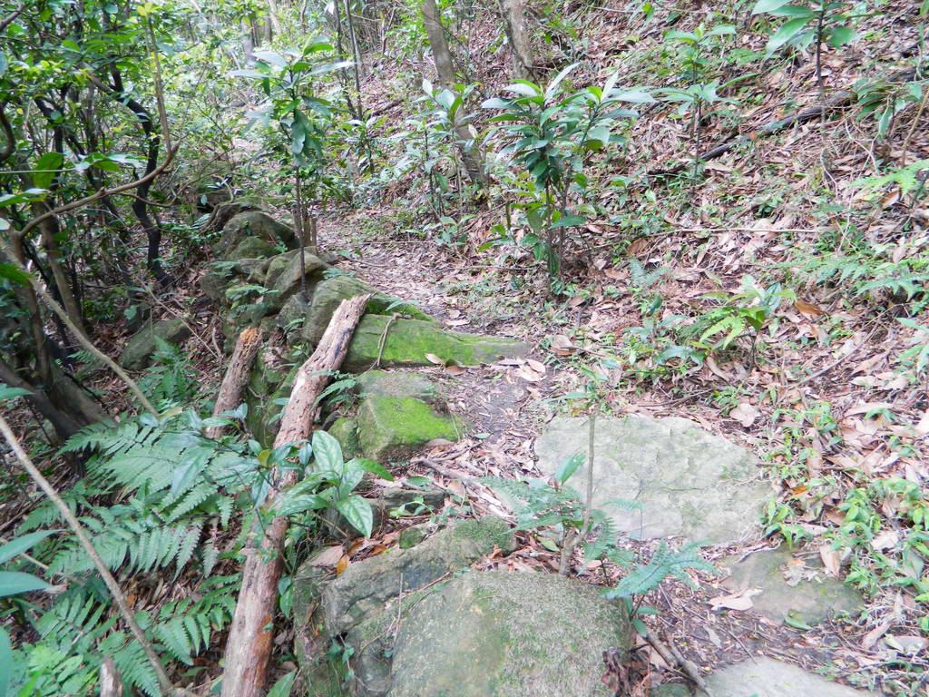 大小粗坑山腰路:大小粗坑山腰路25.JPG