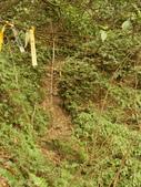 大小粗坑山腰路:大小粗坑山腰路27.JPG