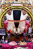 三峽祖師爺誕辰祭神豬110208--魚眼篇:_FEB4562.jpg