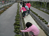 採草莓:DSCN9593.JPG