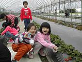 採草莓:DSCN9594.JPG