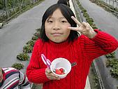 採草莓:DSCN9598.JPG