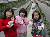 採草莓:DSCN9599.JPG
