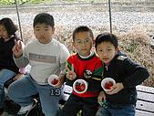 採草莓:DSCN9600.JPG