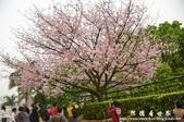 2013天元宮:1831719166.jpg