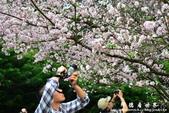 2013天元宮:1831719088.jpg