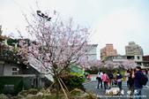2013天元宮:1831719112.jpg