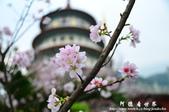 2013天元宮:1831719125.jpg