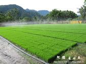 新發海產店-春日秧苗:1733390066.jpg