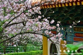 2013天元宮:1831719089.jpg
