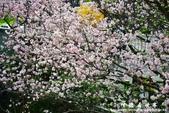 2013天元宮:1831719107.jpg