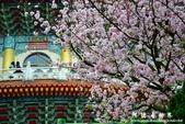 2013天元宮:1831719096.jpg