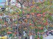 北台灣:1246764444.jpg