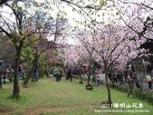 2011陽明山花季:1481334704.jpg