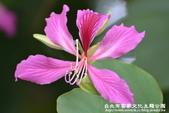 台北市客家文化主題公園:1669915103.jpg