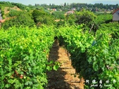 Badacsony葡萄園:1576022098.jpg