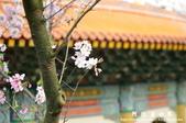 2013天元宮:1831719147.jpg