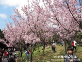 2011陽明山花季:1481334697.jpg