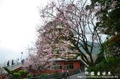 2013天元宮:1831719120.jpg