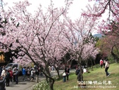 2011陽明山花季:1481334692.jpg