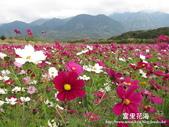 2011富里花海:1837852809.jpg