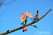 2013天元宮:1831719072.jpg