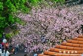 2013天元宮:1831719103.jpg