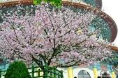 2013天元宮:1831719110.jpg
