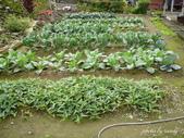 阿德老家及菜園:1895022051.jpg