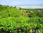 Badacsony葡萄園:1576022087.jpg