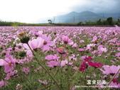 2011富里花海:1837852812.jpg