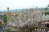 2013天元宮:1831719130.jpg