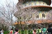 2013天元宮:1831719141.jpg