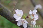 2013天元宮:1831719191.jpg