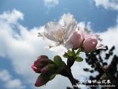 2011陽明山花季:1481334709.jpg